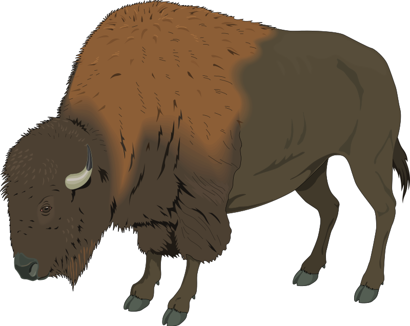 bison clipart-bison clipart-2