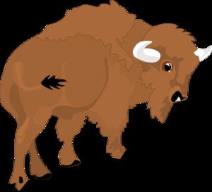 Bison. »-Bison. »-6