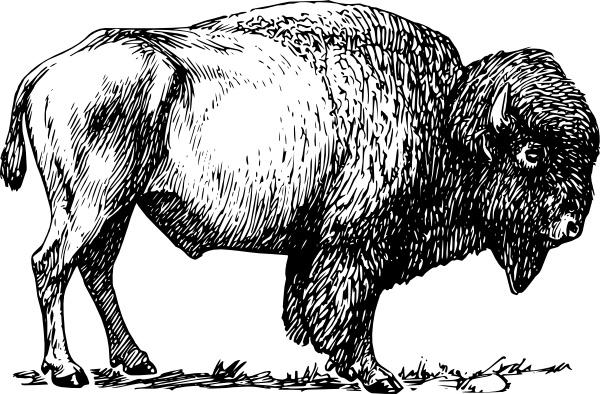 Bison clip art-Bison clip art-4