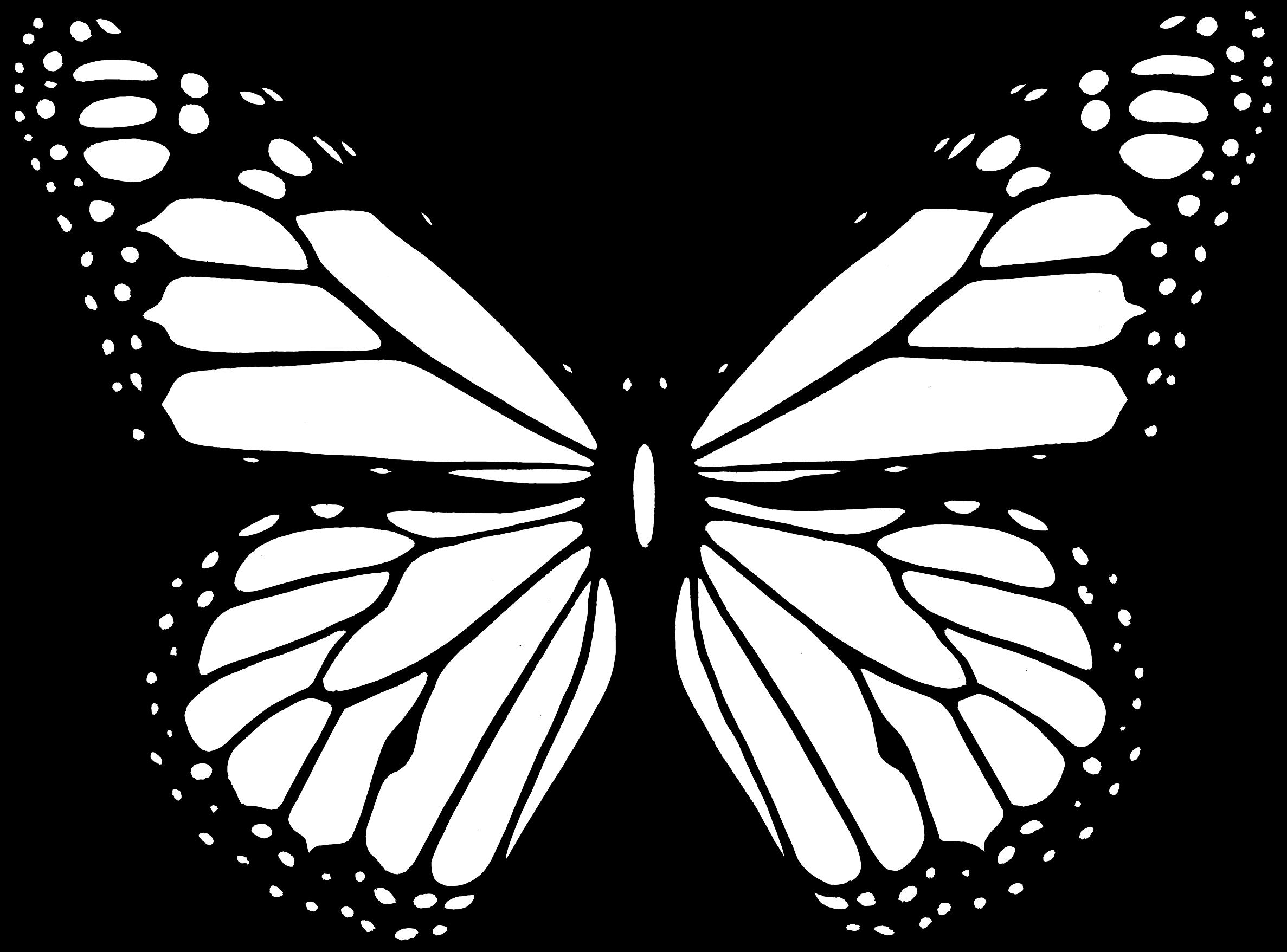 Black And White Butterfly-Black And White Butterfly-1