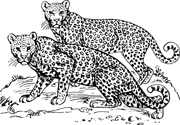 Black and White Couple Leopard Clipart
