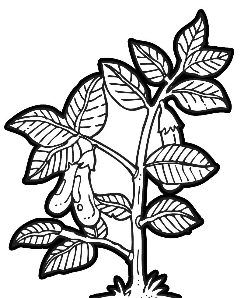 Black And White Plant Leaf. Eggplant Cli-Black And White Plant Leaf. Eggplant Clip Art ..-2