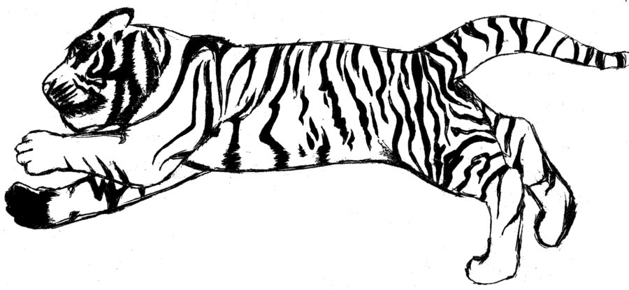 Black and White Tiger-Black and White Tiger-16