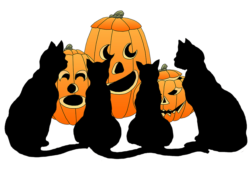 Black cats and pumpkins for Halloween