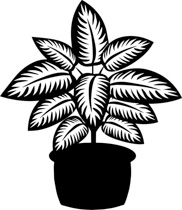Black White Dieffenbachia Plant Black Wh-Black White Dieffenbachia Plant Black White Clipart Size: 160 Kb-4