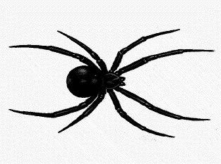 black-widow