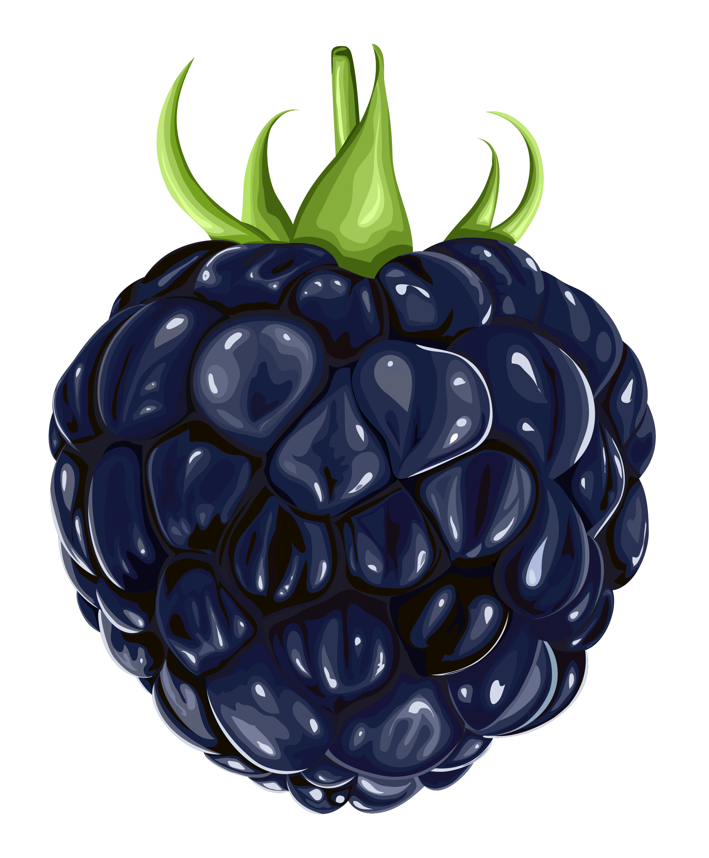Blackberry Clipart
