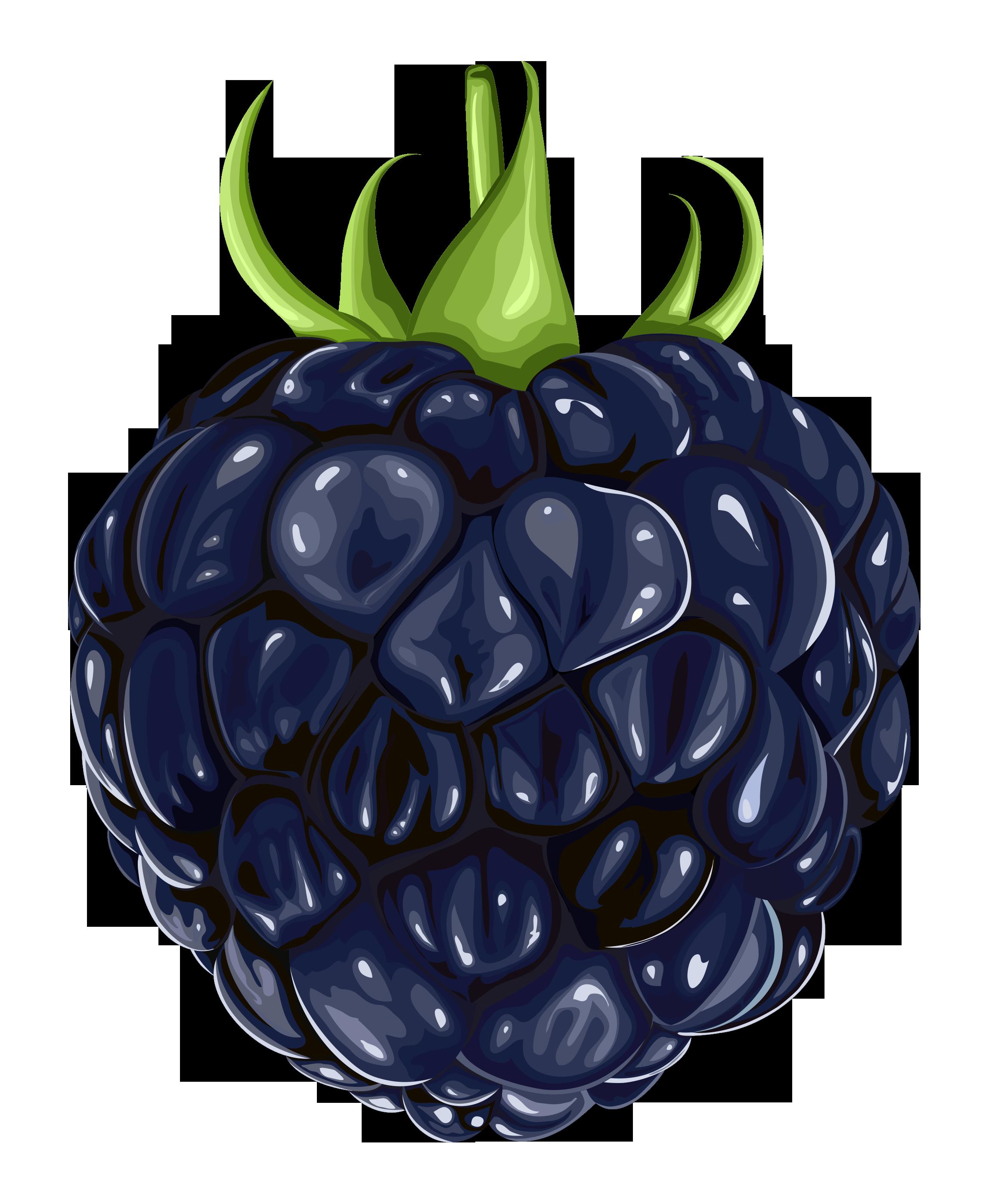 Blackberry Clipart-Clipartlook.com-2311