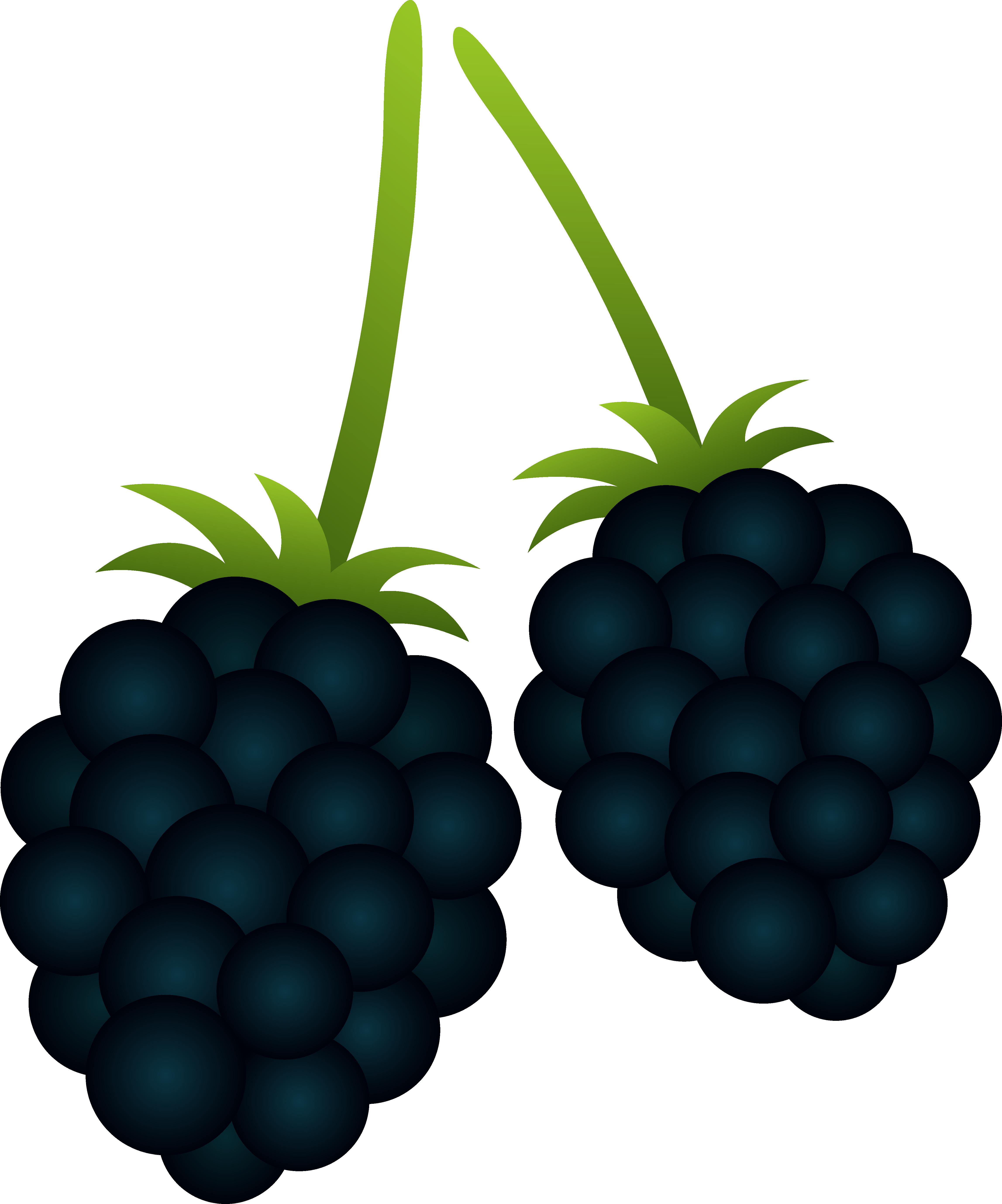 Blackberry Clipart-Clipartlook.com-4590