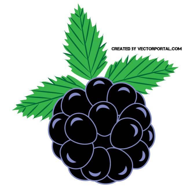 BLACKBERRY CLIP ART VECTOR