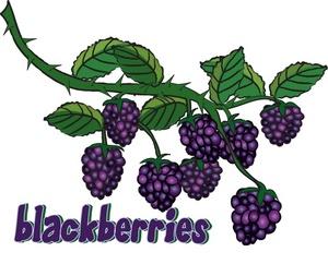 Blackberry Clipart Image