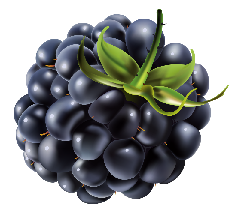 Blackberry PNG Vector Clipart Image