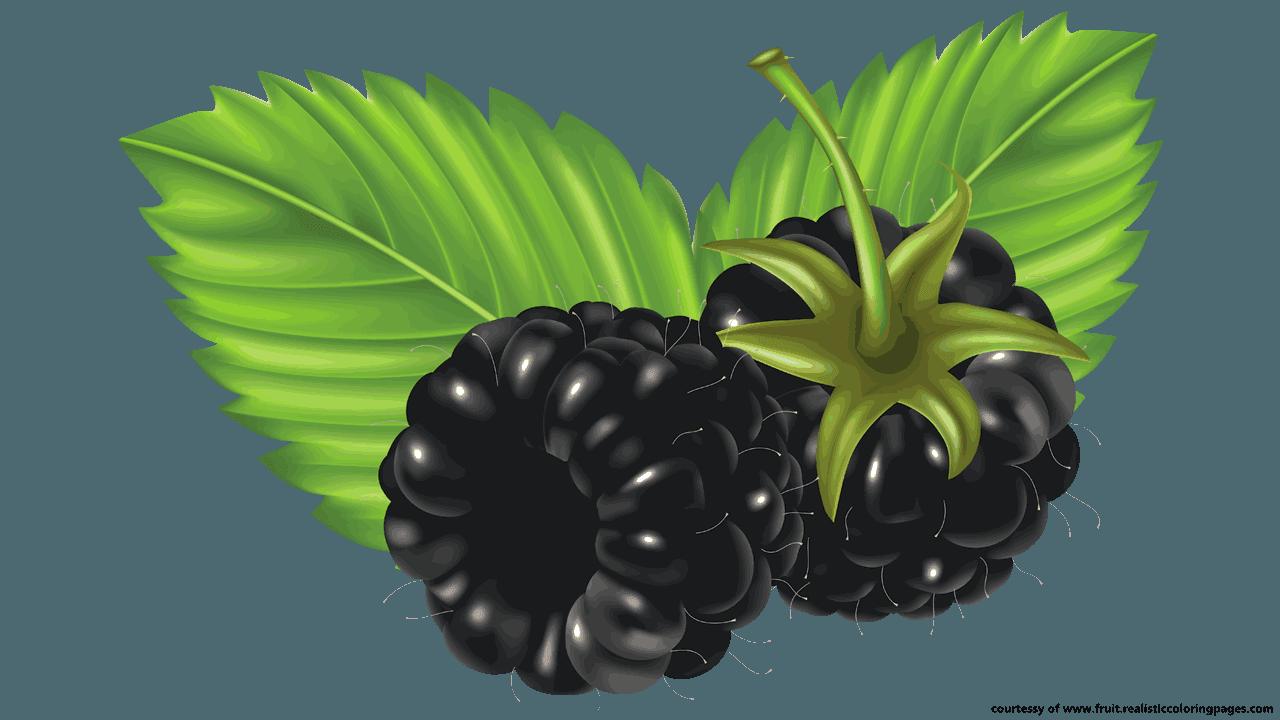 bush clipart blackberry bush #29042038