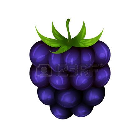 Clipart for blackberry