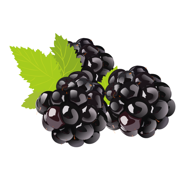 fruit drawing clipart blackberry, Fruit Logo, Set Clipart, Exquisite Clipart  PNG Image and