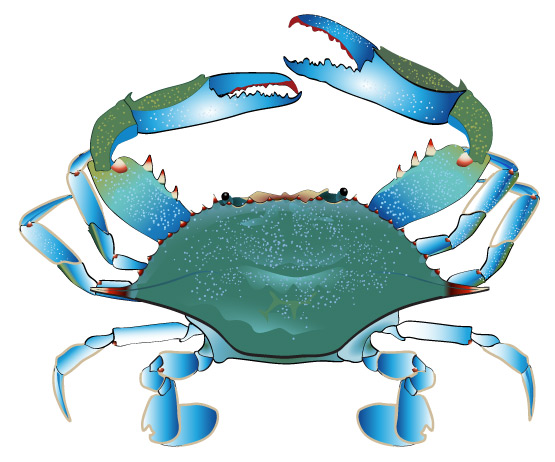 Blue Crab Free Clipart