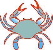 Blue Crab White Background; Blue Claw Cr-blue crab white background; blue claw crab-10