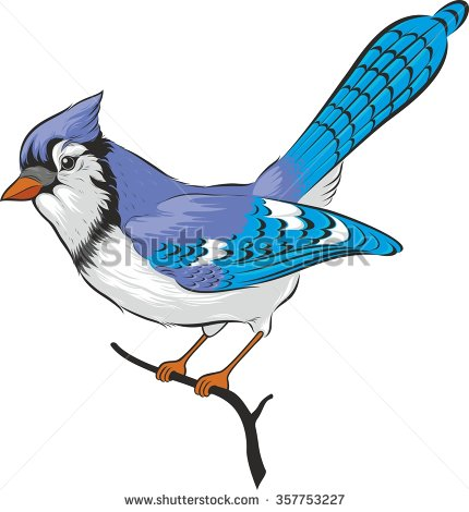 Blue jay bird. Vector. Isolated on white background.
