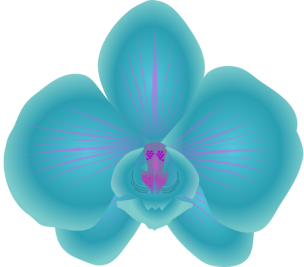 Blue Orchid Clipart #1