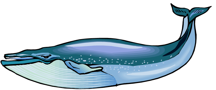 Blue Whale Clip Art | Clipart library - Free Clipart Images