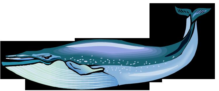 Blue Whale Clip Art | Clipart library - -Blue Whale Clip Art | Clipart library - Free Clipart Images-6