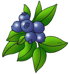 Blueberries-Blueberries-1