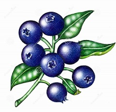 Blueberries - Blueberry Clip Art