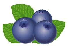 Blueberries Stock Photo-Blueberries Stock Photo-5