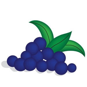 blueberry clipart black and white