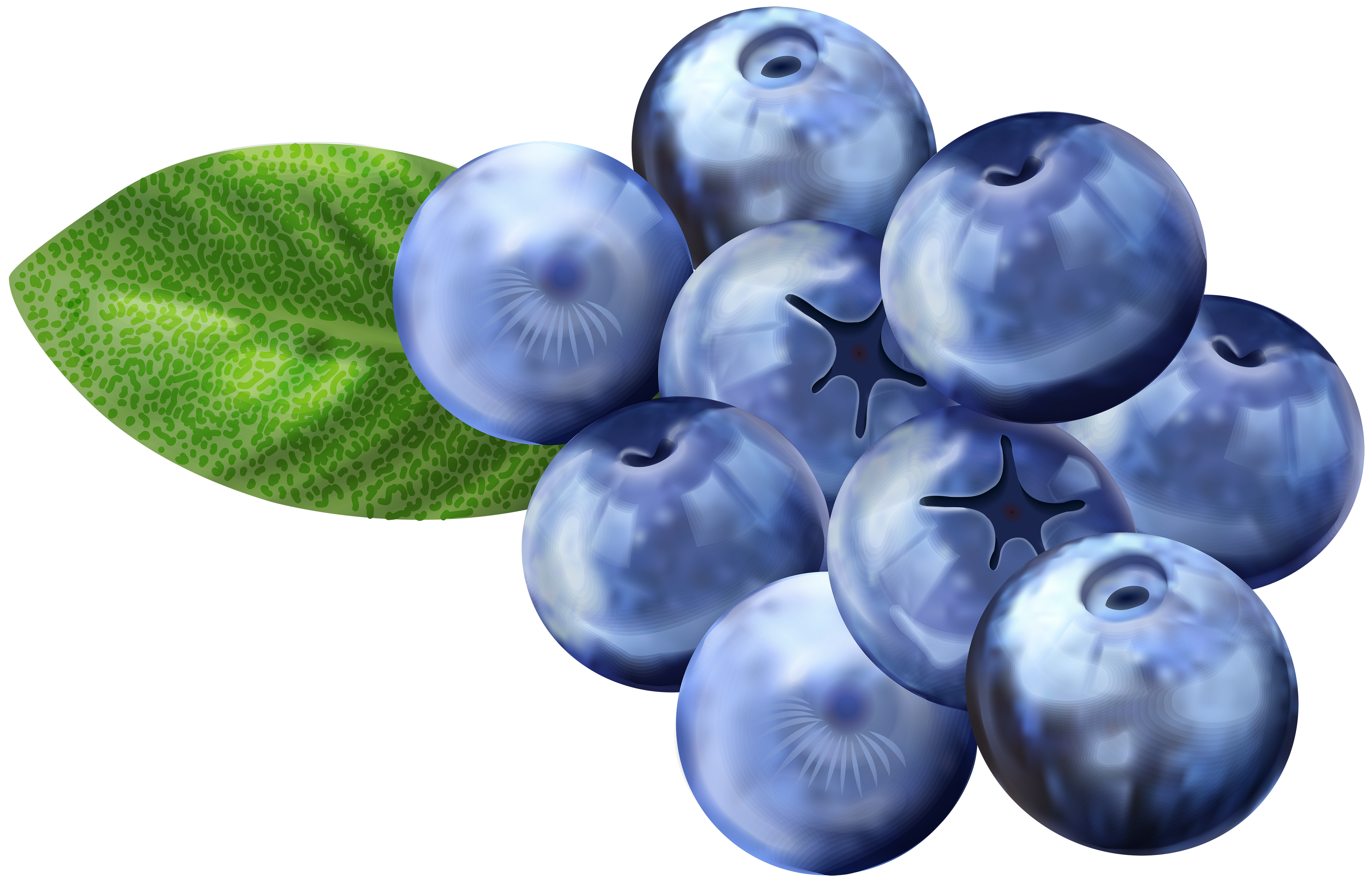 Blueberries PNG Clip Art Image