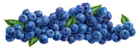 Free Blueberry Clipart