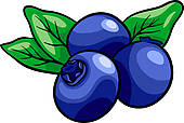 ... blueberry fruits cartoon illustration