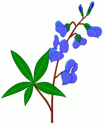 Bluebonnet Clipart - Bluebonnet Clip Art