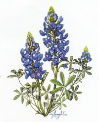 Bluebonnet cliparts. Bluebonn - Bluebonnet Clip Art