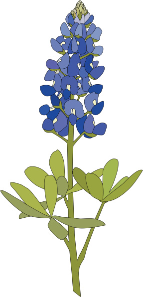 Bluebonnet Flower vector art  - Bluebonnet Clip Art