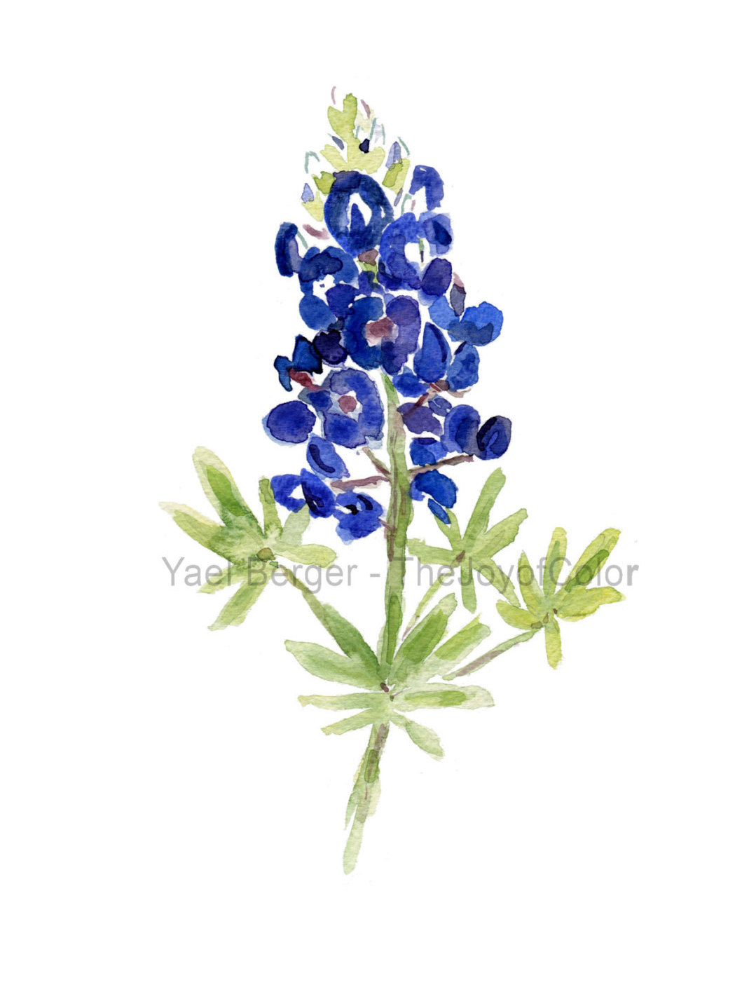 Bluebonnets Clipart Popular items for bluebonnets on etsy