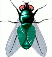 Clipart Fly