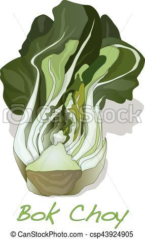Bok Choy Vegetable Vector