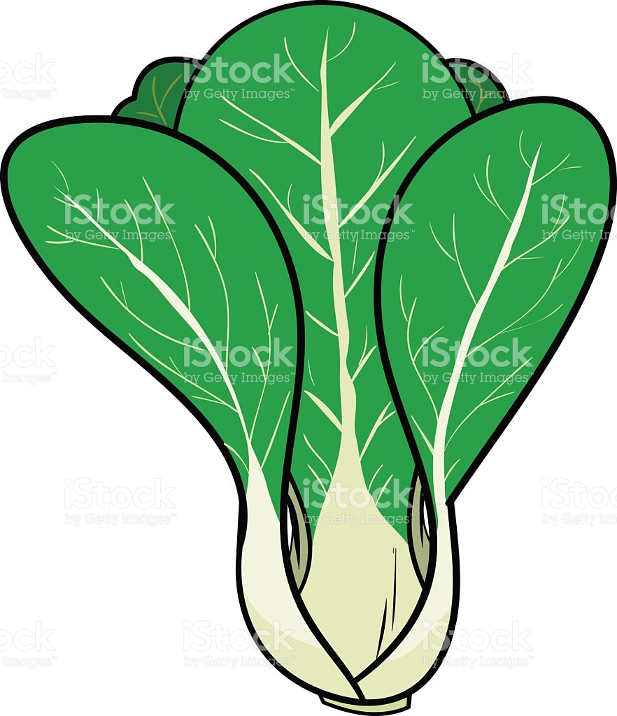Pak Choi/Bok Choy (Chinese Cabbage) royalty-free pak choibok choy stock