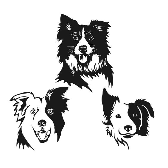 Border Collie Cuttable Design Cut File. Vector, Clipart, Digital Scrapbooking Download, Available