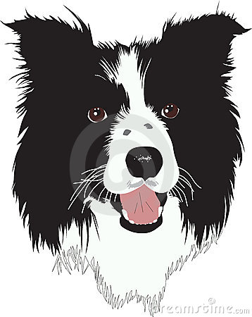 Border Collie Stock Illustrations u2013 177 Border Collie Stock Illustrations, Vectors u0026amp; Clipart - Dreamstime