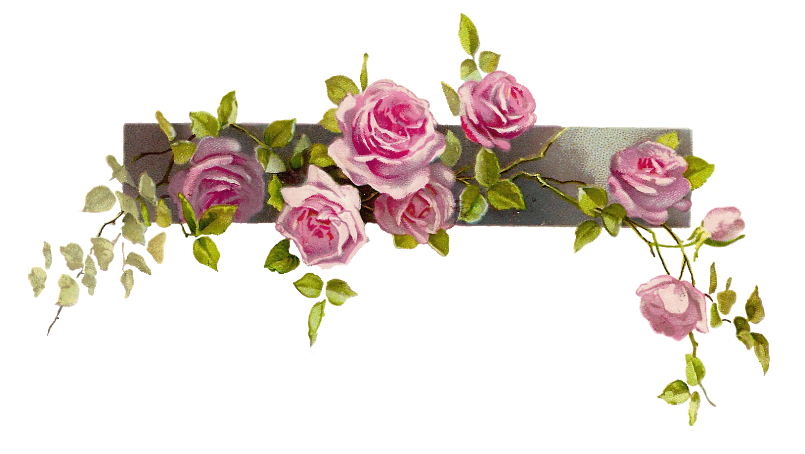 Border Flower Rose Line Free Images At Clker Com Vector Clip Art