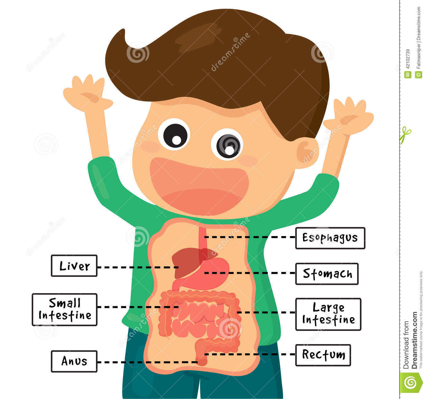 Boy Was Delighted To Show The Human Digestion System
