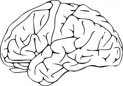 Brain clip art free vector in open offic-Brain clip art free vector in open office drawing svg svg-7