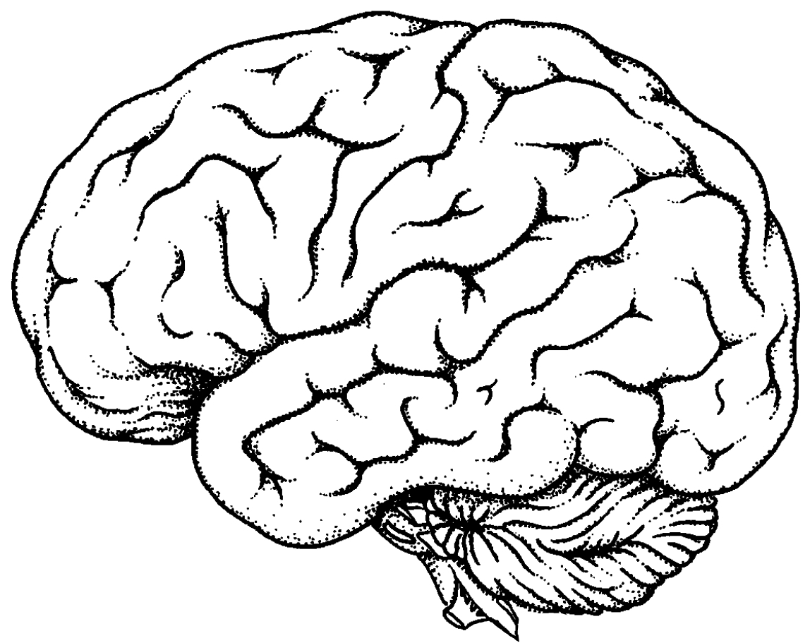 Brain line drawing clipart