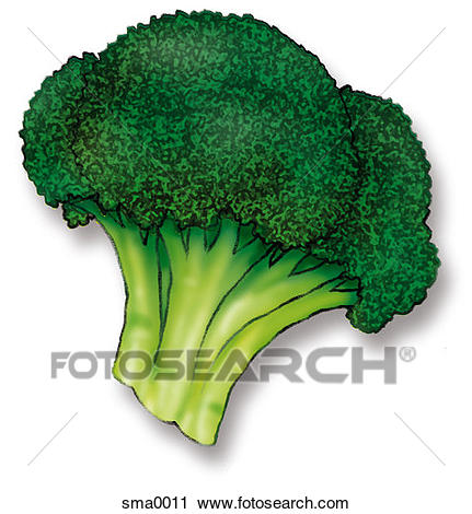 Broccoli-Broccoli-14