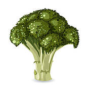 Broccoli; broccoli