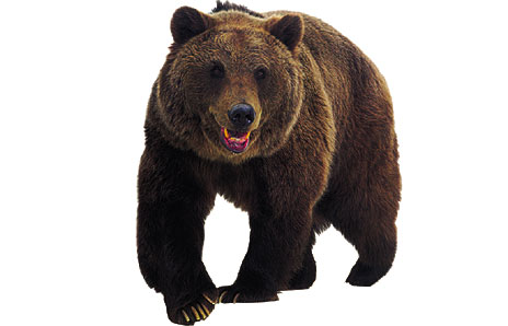 Brown Bear Clipart Item 2
