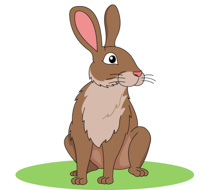 Brown Rabbit Clipart Size: 91 Kb
