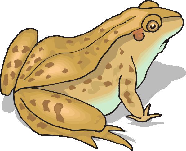 Brown Spotted Frog Clip Art At Clker Com Vector Clip Art Online